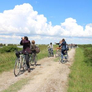 In bicicletta alla scoperta dei fenicotteri