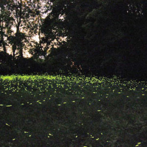 Di notte tra lucciole, gufi e pipistrelli