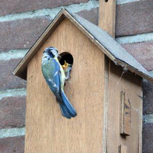 La casetta degli uccelli