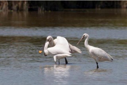 Corso da mini Birdwatcher