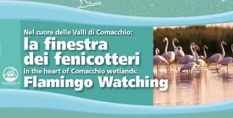 Escursioni Fiera Birdwatching - Finestra dei Fenicotteri